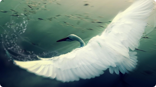 bird-wallpaper-blog